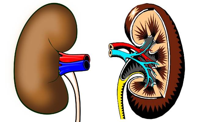 Common Habits That May Affect Your Kidneys
